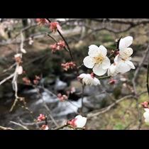 ナオ|富士吉田市 下吉田のキャバクラ|Cinderella(シンデレラ)