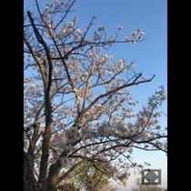 誉生 福岡市 東区香椎駅前のキャバクラ Rio 香椎店(リオ 香椎店)