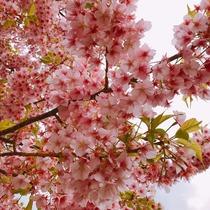 桜咲 飛鳥 厚木市 中町のキャバクラ JOKER(ジョーカー)