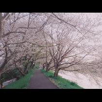 きょうこ|島田市 日之出町のキャバクラ|CREAM(クリーム)